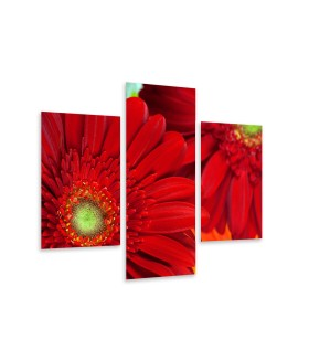 Multi-canvas 3x Beautiful gerbera