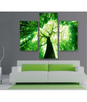 Multi-canvas 3x Forest sunlight