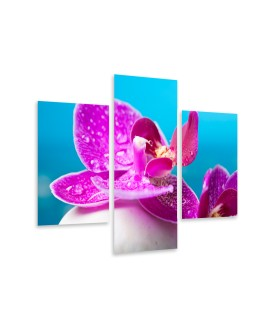 Multi-canvas 3x Pink orchid spa