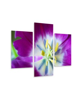 Multi-canvas 3x Purple flower