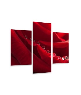 Multi-canvas 3x Red rose with water drops