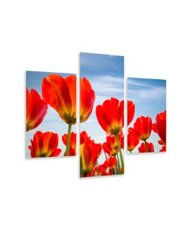 Multi-canvas 3x Red tulip
