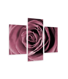 Multi-canvas 3x Rose closeup