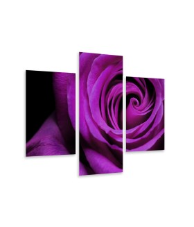 Multi-canvas 3x Rose violet
