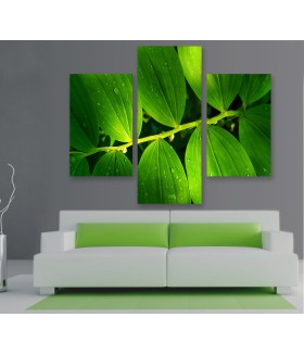 Multi-canvas 3x Solomon Seal