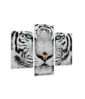 Multi-canvas 3x Tiger