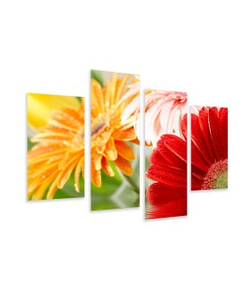 Multi-canvas 4x Daisy gerbera
